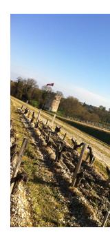 Bordeaux Harvest 2011